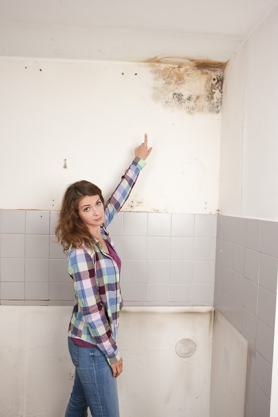mold remediation services in Burton, MI