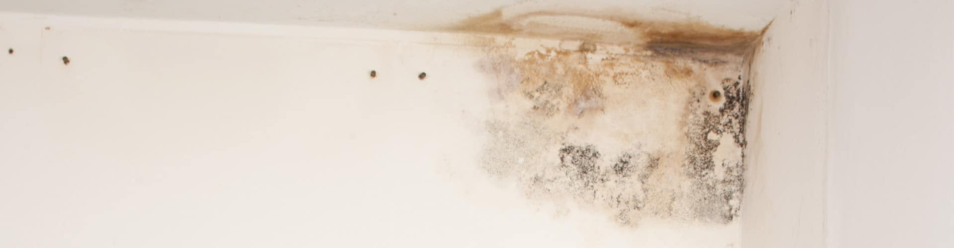 Mold-Growth-Corner-of-Ceiling-500