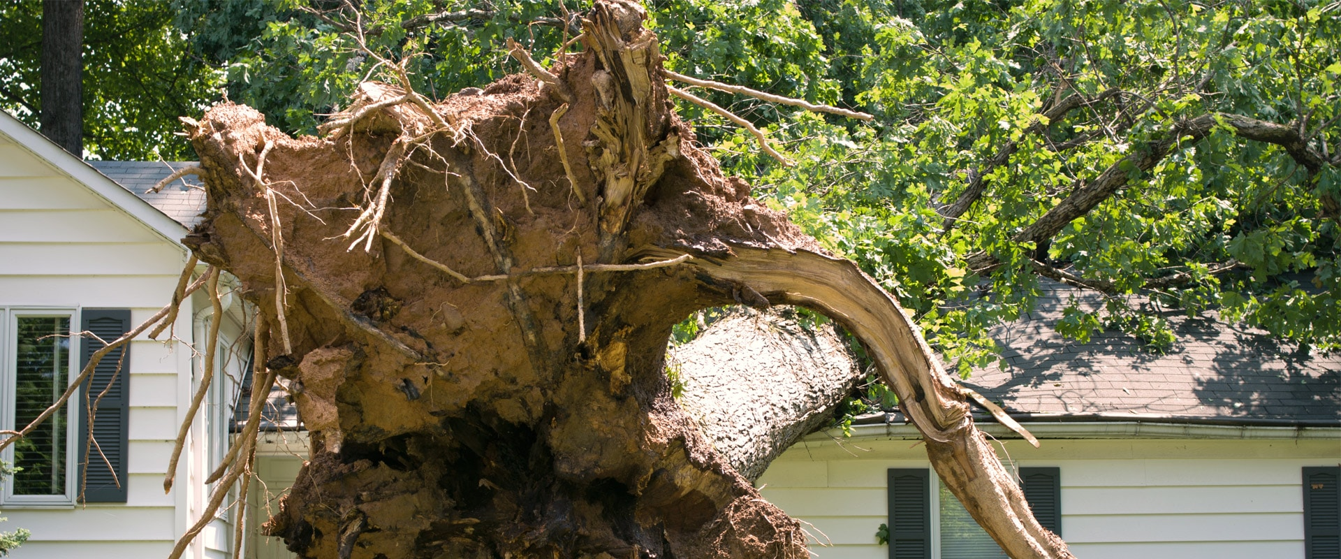 Wind Damage Restoration Hail Damage Repair