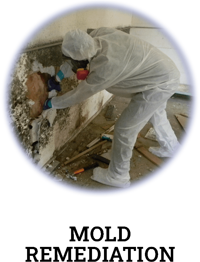 mold remediation and removal services in Houston